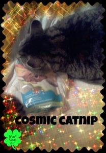 #8. Catnip!
