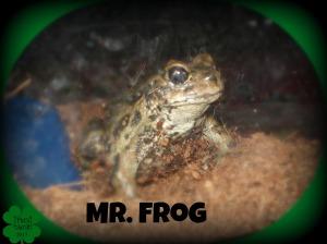 #6. Mr. Frog