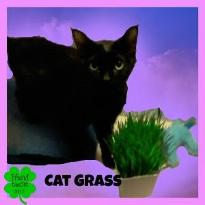 #2 and #3 - Mr. Blacks eyes/ Cat Grass