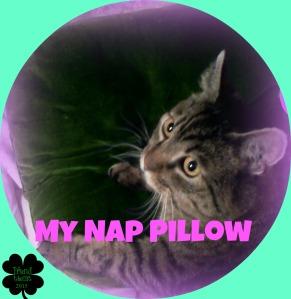 #4 My nap pillow.